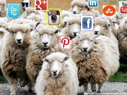 final social sheep image